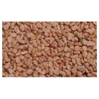 Fenugrec semence 250 g POUDRE Trigonella foenum-graecum