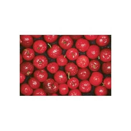 GELULES ACEROLA 330 mg 120 gélules