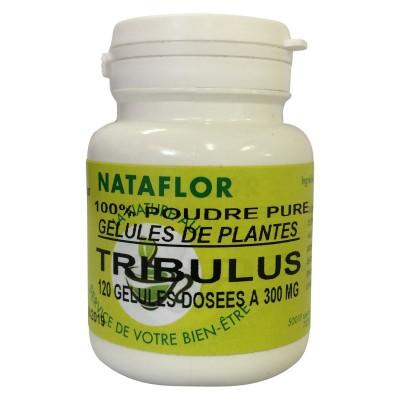 GELULES TRIBULUS 120 gélules dosées à 300mg.