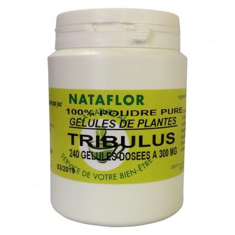 GELULES TRIBULUS 300mg.