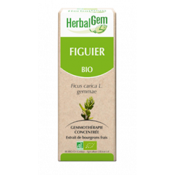 FIGUIER, le bourgeon de la détente 15 ml