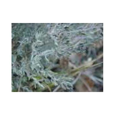 Thym mondé feuille 250 g POUDRE Thymus vulgaris