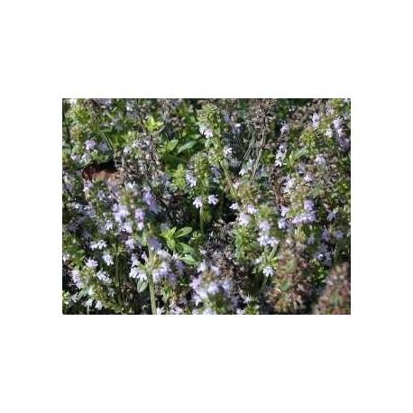 HUILE ESSENTIELLE SERPOLET Thymus serpyllum 15 ml.
