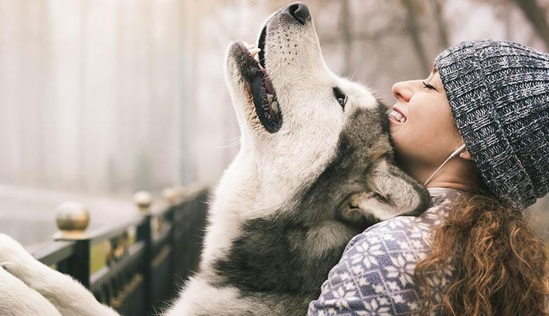 Mon Herboristerie Animalière : le site des soins naturels des chiens, chats et chevaux